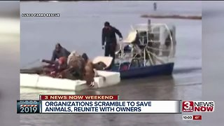 Dramatic animal rescue at Sycamore Farms