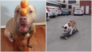 Anche i cani possono avere talento