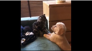 Puppy And Kitten Boxing Match Set To Rocky Theme Song