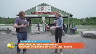 Fossil Fridays at Penn Dixie Fossil Park and Nature Reserve