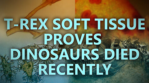 T-rex soft tissue proves dinosaurs died recently