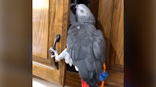 Athletic parrot is on an extremely dangerous mission