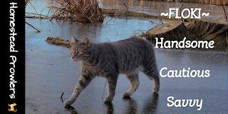 Sunday Morning Cat Walk