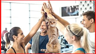 Cat greets people at the gym