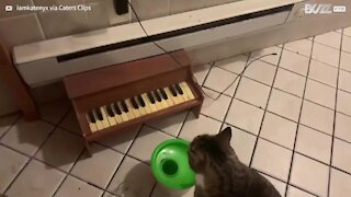 Cat requests food by playing piano