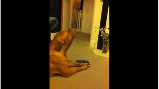 Talented Dog Loves Singing His Favorite Song