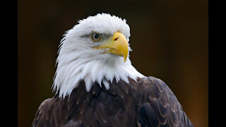 Restore Liberty