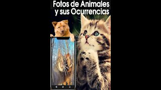 funny video of animals and their occurrences