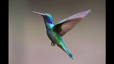 SWEET LITTLE HUMMING BIRD