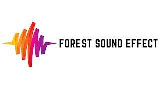 Forest Sound Effect