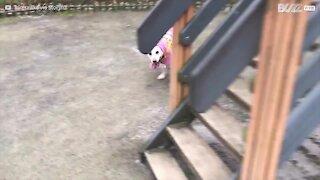 Cagnolina adora lo scivolo!