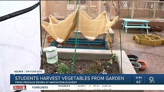 Students to harvest vegetables grown at Innovation Academy garden