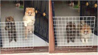 Cani pensano di essere chiusi in gabbia!