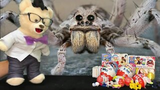 Learn about Spiders with Chumsky Bear | LOL Surprise Egg Open | Educational Videos for Kids