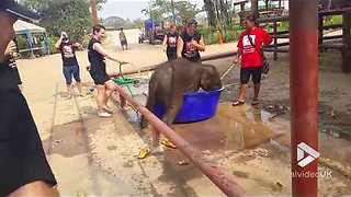 Adorable Baby Elephant Loves Taking Baths