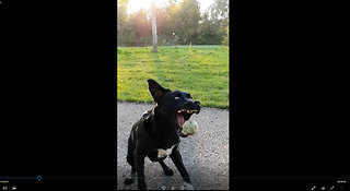 Amazing Ball Catches by Dog in Epic Slow Motion - DOGS IN SLOW MOTION