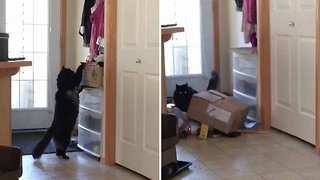 Clumsy Cat Flips Box Over On Itself