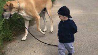Søtt vennskap mellom baby og en enorm hund