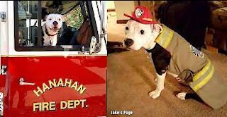 scared puppy rescued by firefighter!!
