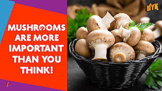 Top 15 Facts About Mushrooms You Didn't Know :) :)