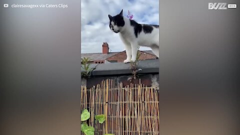 Vídeo inédito mostra conversa entre dois gatos