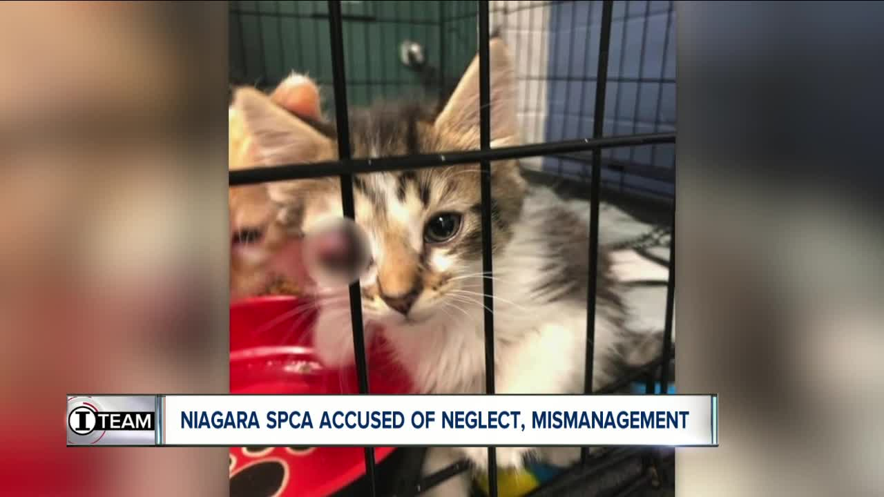 Niagara SPCA accused of neglect, mismanagement