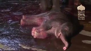 Wonderful Elephant Mother Giving Birth In Bali