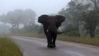A Close Encounter With an Elephant