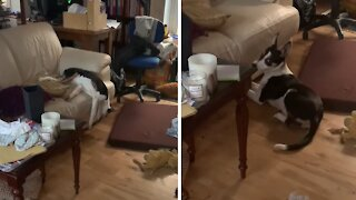 Sleeping puppy falls off couch during nap