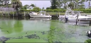 Governor Ron DeSantis announces appointments to Blue-Green Algae Task Force