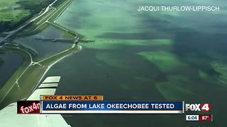 Algae from Lake Okeechobee to be tested