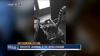 'It bit me!': Wisconsin women sue over lemur attacks