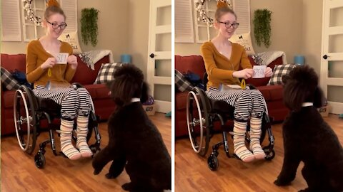 Super smart doggy learns to read words