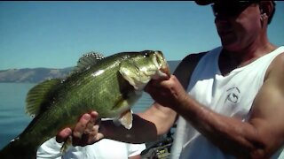 Crushing Summer Bass on Frogs