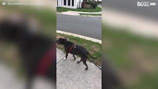 """Lille dreng slutter sig til hundene, når han hører """"sæt dig"""""""