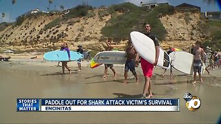 Paddle out for shark attack victim's survival