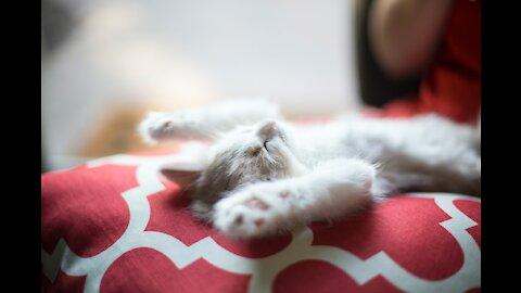 Meditate Like a Cat