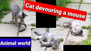 Cat devouring a Mouse Animal World