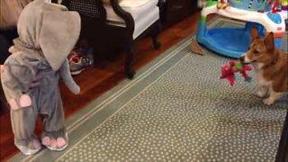 Baby i elefantdrakt skremmer hund
