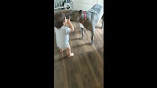 Precious playtime moment between toddler and doggy