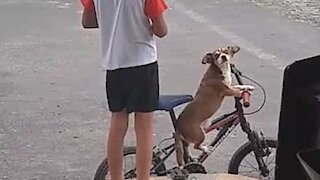 Dog sits on bike waiting for owner