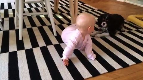 Baby Girl Loves Being Entertained By Adorably Energetic Pup