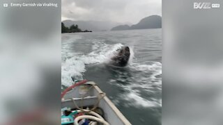 Friendly sea lions swim with boat