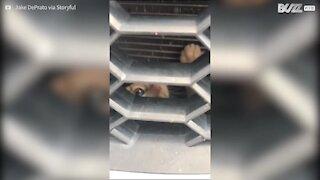 Trovano un gattino incastrato nel paraurti