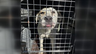 Wisconsin Humane Society welcomes 75 animals displaced from Texas storms