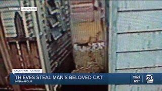 Man heartbroken over stolen cat