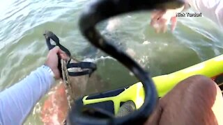 South Florida jet skier saves dolphin caught in net