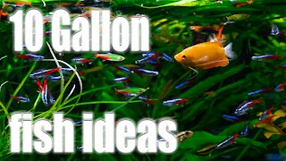 AWESOME Fish Ideas for 10 Gallon Aquariums