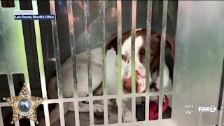 North Fort Myers man in custody after allegedly shooting dog in snout