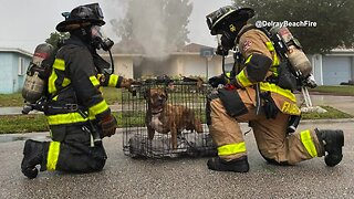 Delray Beach firefighters rescue dog from burning home